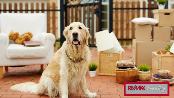 Tips for Moving With Your Pet